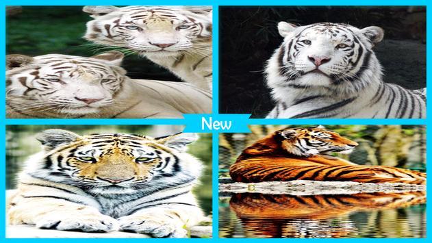 Tiger HD Wallpapers Free apk screenshot