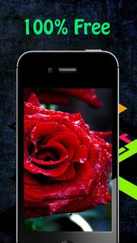 Rose Wallpapers apk screenshot