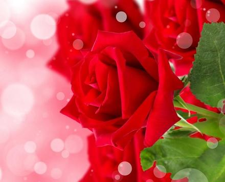 Roses Wallpapers for Chat screenshot 5
