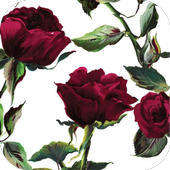Rose HD Wallpapers icon