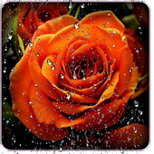 Beautiful Roses Live Wallpaper icon