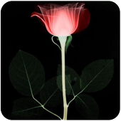 Lonely Rose Live Wallpaper icon