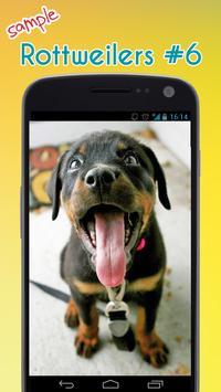 Rottweiler Wallpaper apk screenshot