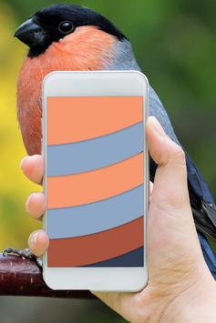 Colors Changing Live WP With 3D Cube LWP apk screenshot