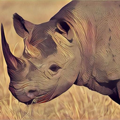 Deadly Desert Rhino Simulator icon