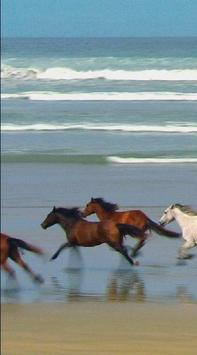 Horse LiveWalpaper poster