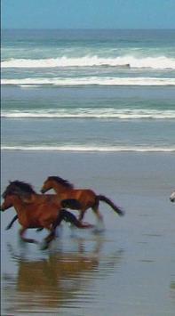 Horse LiveWalpaper apk screenshot