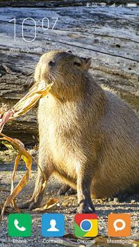 Capybara Wallpapers poster
