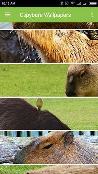 Capybara Wallpapers screenshot 7