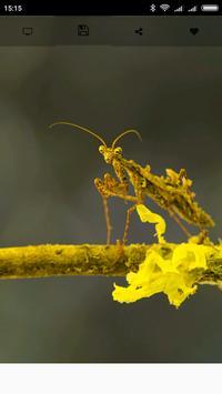 Mantis Wallpapers apk screenshot