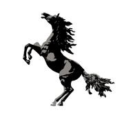 Black Stallion icon