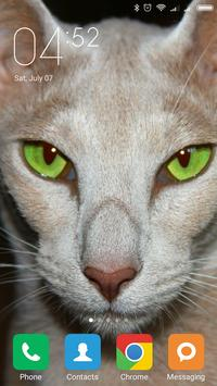 Oriental Shorthair Wallpapers screenshot 6