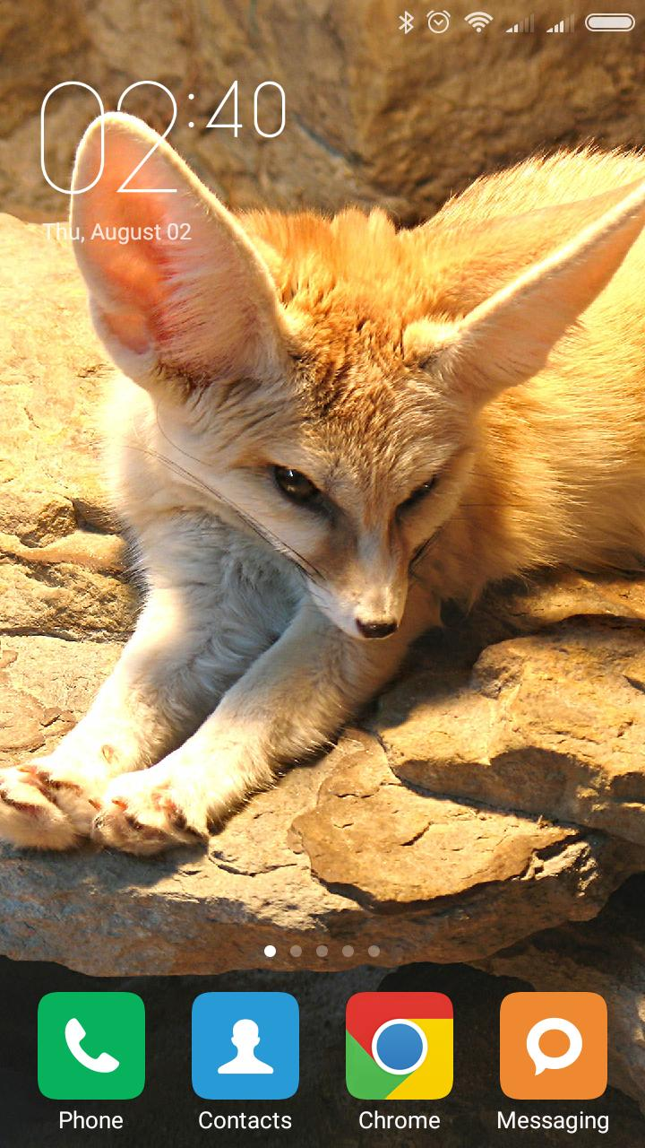 Fennec Fox Wallpapers For Android Apk Download
