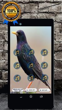 Starling Bird Call: Starling Song & Starling Sound screenshot 1