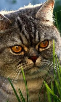 Cat New HD Wallpapers poster