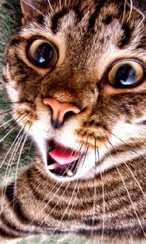 Cat New HD Wallpapers apk screenshot