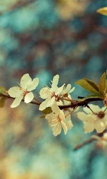 Beautiful HD Wallpapers apk screenshot