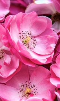 Pink New HD Wallpapers apk screenshot