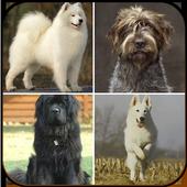 Icona Family Dog Breeds