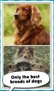 5 Schermata Family Dog Breeds