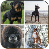 Protective Dog Breeds icon