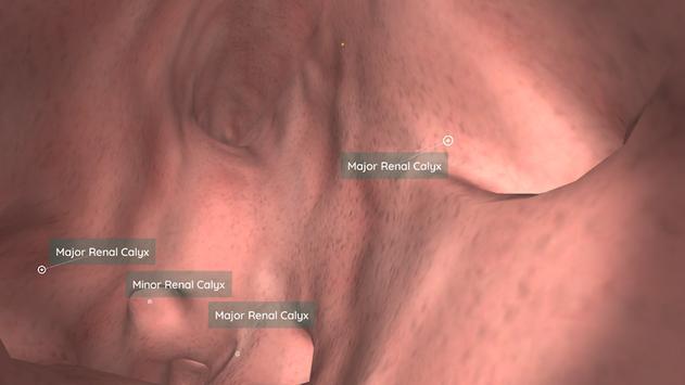 Anatomyou VR | Anatomía Humana Descarga APK - Gratis Educación ...