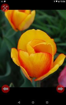Fondos de flores(movil) apk screenshot