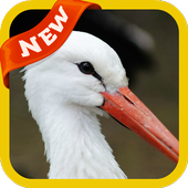 Stork Wallpaper icon