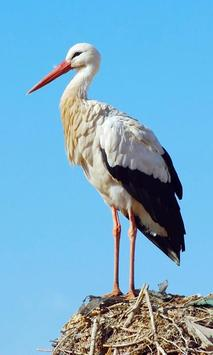 Stork Wallpaper screenshot 7