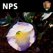 Zion Park Wildflowers icon