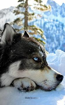 Husky beautiful dogs HD lock screen wallpaper apk screenshot