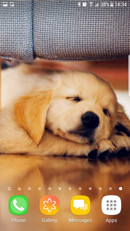 Golden Retriever Wallpapers Hd For Android Apk Download