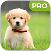 Puppy HD Wallpapers icon