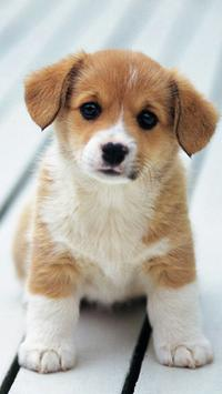 Puppy HD Wallpapers poster