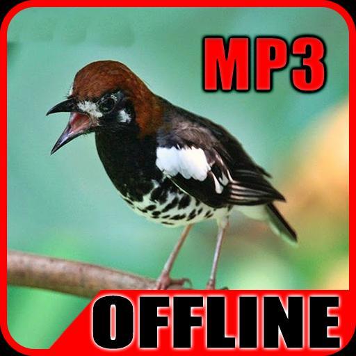 Suara Burung Anis Kembang For Android Apk Download