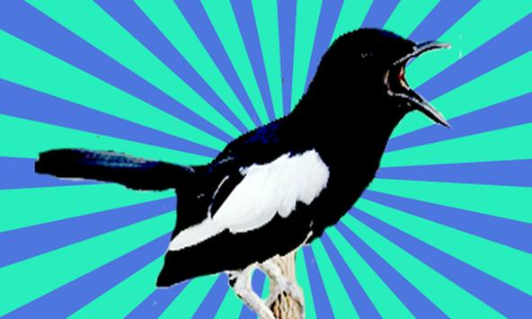 Masteran Burung Kacer Poci screenshot 1