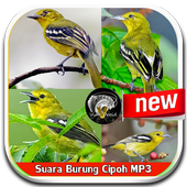 Sound Of Bird Cipoh Mp3 icon