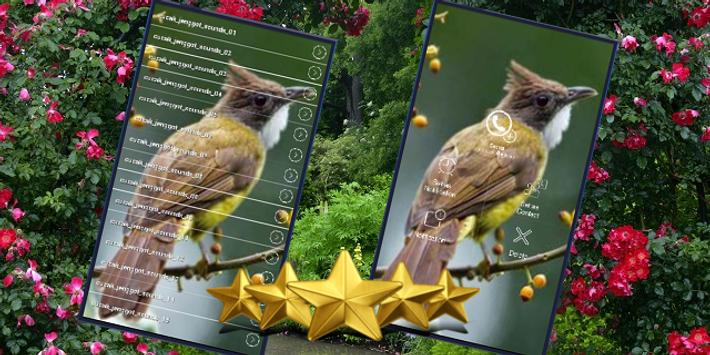 Suara Burung Cucak Jenggot: Masteran Cucak Jenggot poster
