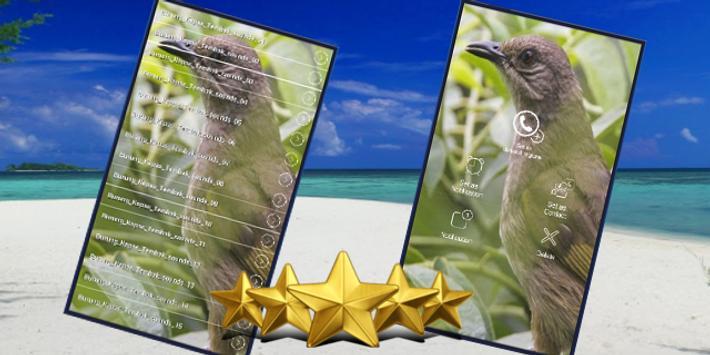 Suara Burung Kapas Tembak : Masteran Kapas Tembak screenshot 1