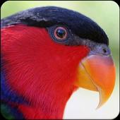 Suara Burung Nuri : Kicau Burung Nuri Masteran icon