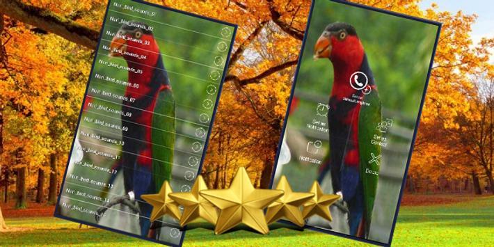 Suara Burung Nuri : Kicau Burung Nuri Masteran apk screenshot