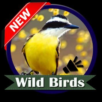 Wild Birds poster