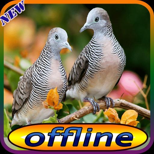 Suara Burung Perkutut Dan Pikat For Android Apk Download