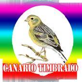 Canto de Canario Timbrado icon