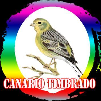 Canto de Canario Timbrado poster