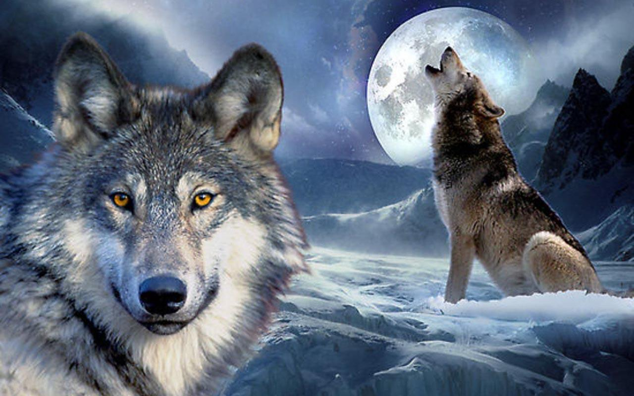 3D Wolf Wallpapers for Android - APK Download