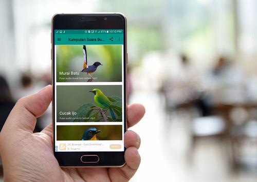 Kumpulan Suara Burung Offline apk screenshot