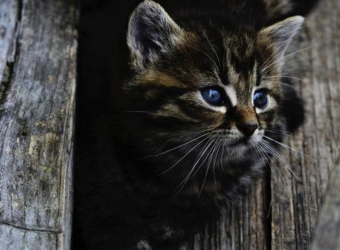 Cats Wallpapers screenshot 9