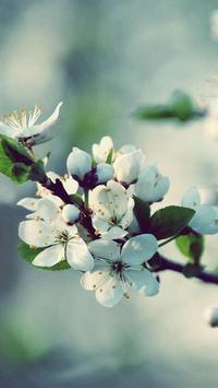Apple Blossom Wallpapers screenshot 2