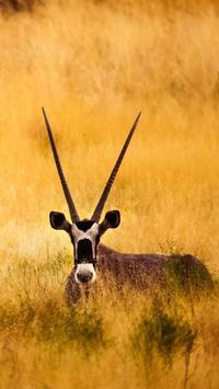 Gazelle Wallpapers screenshot 1